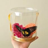 Прозрачная коробочка для живых бабочек