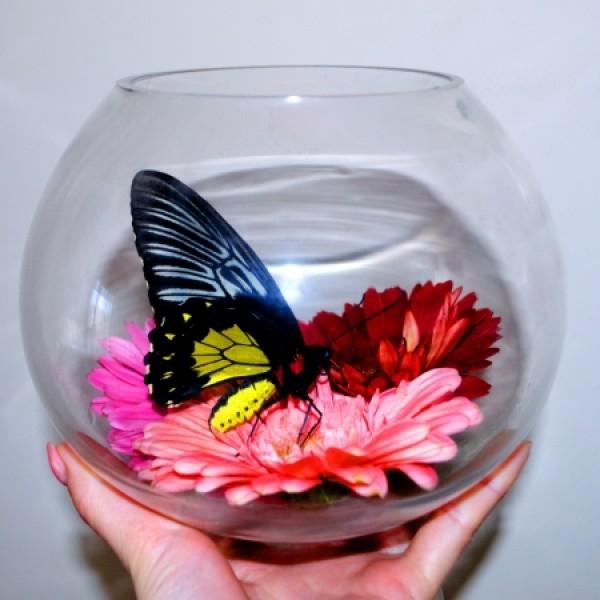 Бабочка в стеклянном бокале