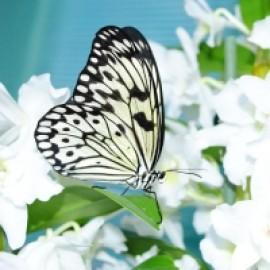 Бумажный змей живая бабочка